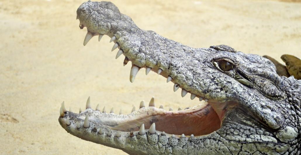 Gegen Zahnverlust ist noch kein Kraut gewachsen. Wohl aber Prophylaxe und regelmäßige Vorsorge.
